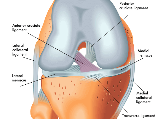 ACL knee ligament injuries
